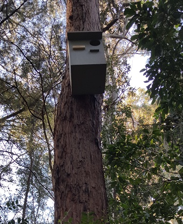Nest Box #1